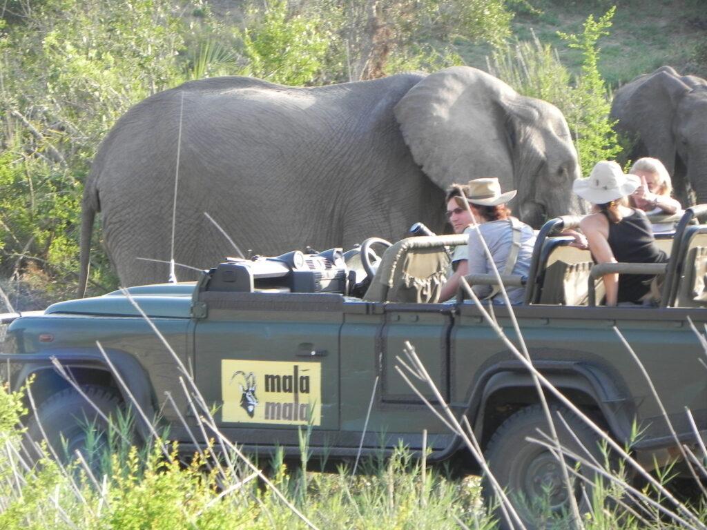 SA Oct 5 2012 Elephant Close Encounter