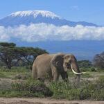 Elephant on Mount Kilimanjaro Climb
